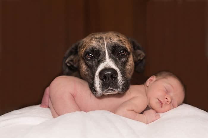 Babies and Pets: How to Make the Introductions Safely